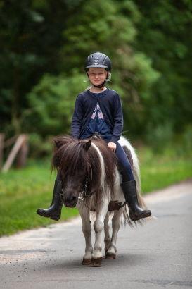 Pferde - Lüneburger Heide