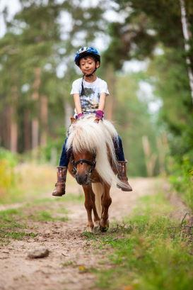 Ponys - Lüneburger Heide